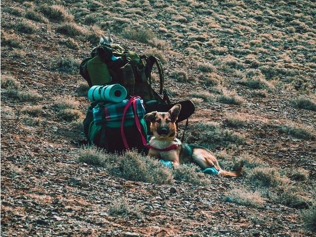Care sunt accesoriile de camping pe care nu trebuie să le uiți acasă?